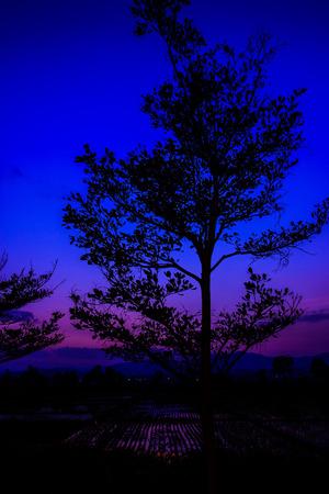 cornfield: cornfield in twilight