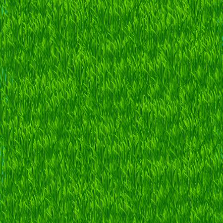 Green grass field. Grass Border. Vector Illustration.