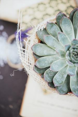 composition: succulent plant composition