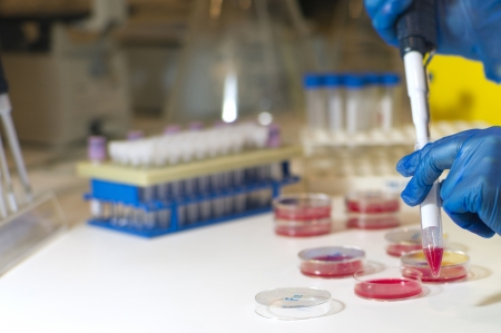 calibrated: It can be seen two hands with blue gloves pipetting a red liquid in a tube  There are Petri dishes around and also some laboratory utensils  The background is out of focus Stock Photo