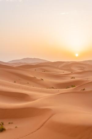 sandhills: Sunrise in the Saara desert. Stock Photo