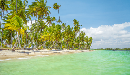 island paradise: The Carneiros beach is located in the state of pernambuco, Brazil. It is located along a former coconut farm, and still keeps its wilderness. Stock Photo
