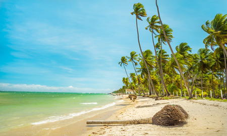 The Carneiros beach is located in the state of pernambuco, Brazil. It is located along a former coconut farm, and still keeps its wilderness.