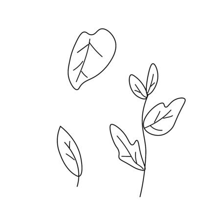 TThe vector leaves of the basil black line. Simple food and cooking illustration in doodle style on a white  background hand drawn. Design for social networks, web, advertising, banners, menus, recipes. Illustration