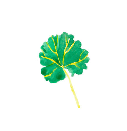 One watercolor green leaf geranium hand drawn. Spring flower illustration on a white isolated background. Design for stickers, cards, banners, posters, wallpaper, packaging and textiles.