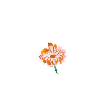 One watercolor pink primrose hand drawn. Spring flower illustration on a white isolated background. Design for stickers, cards, banners, posters, wrapping paper, wallpaper, packaging. 版權商用圖片