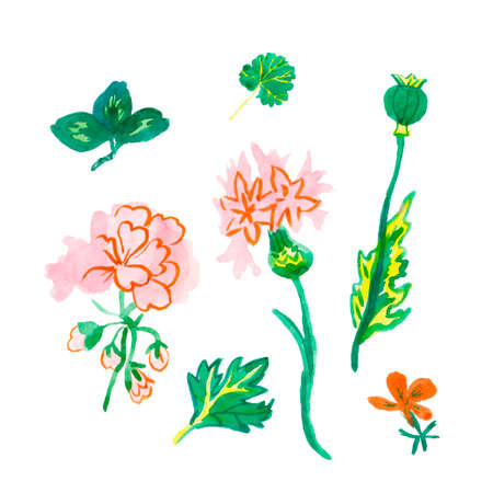 Set of watercolor pink and orange primrose, viola, cornflower and green leaves hand drawn clip art. Spring flower illustration on a white isolated background. Design for stickers, cards, packings.