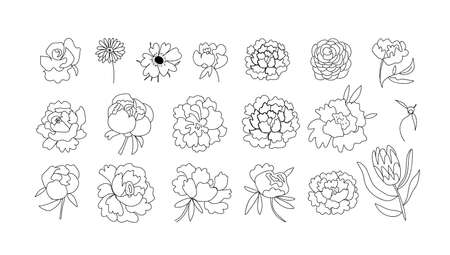 Big vector set of flowers Peony,Rose,Gerber,Anemon, Protea.Botanical illustrations black line art.Design for web,social networks,invitations for weddings,cards, coloring,packaging.