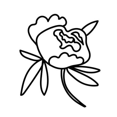 Vector single Peony. Botanical illustration doodle black line art on a white isolated background.Design for social media,web,cards,textiles, wrapping paper,packaging,prints,coloring. Ilustracja
