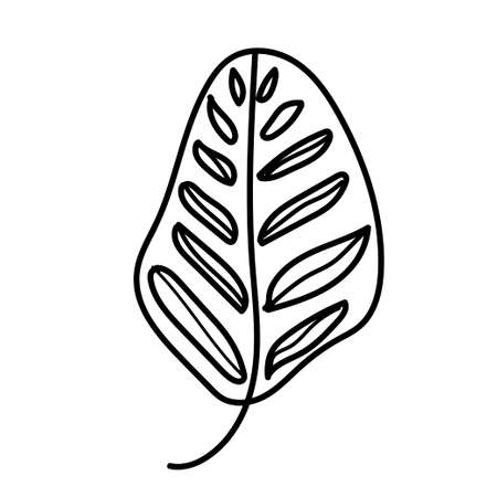 The vector leaf of the Calathea hand drawn. Tropical and botanical illustration black line art on a white isolated background. Design for web,social networks,textiles,stickers, cards, packaging.