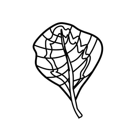 The vector leaf of the Calathea hand drawn.Tropical and botanical illustration black line art on a white isolated background. Design for web,social networks,textiles,stickers, cards, packaging.