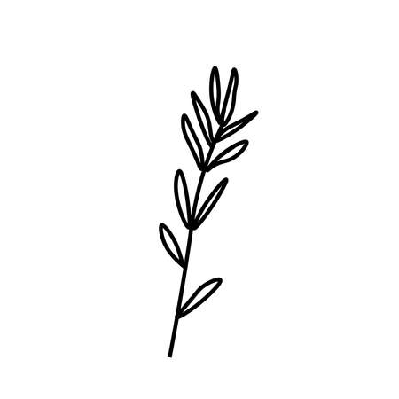 Vector rosemary branch with a black line. Simple food and cooking illustration in doodle style on a white isolated background hand drawn. Design for social networks, web, banners, menus, recipes.