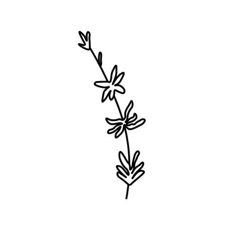 Vector thyme branch with a black line. Simple food and cooking illustration in doodle style on a white isolated background hand drawn. Design for social networks, web, banners, menus, recipes.