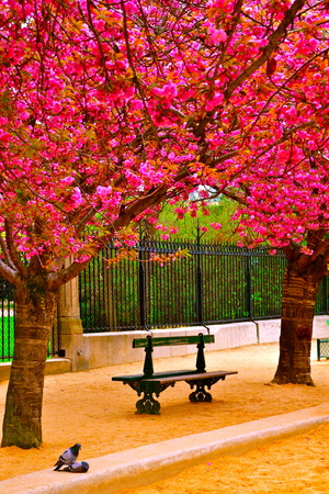sheltered: A bench sheltered by blossoms on a street in Paris, France