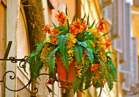 adorning: Flowers adorning a street in Rome, Italy