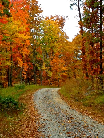 yellow trees: A footpath through the vivid autumn countryside