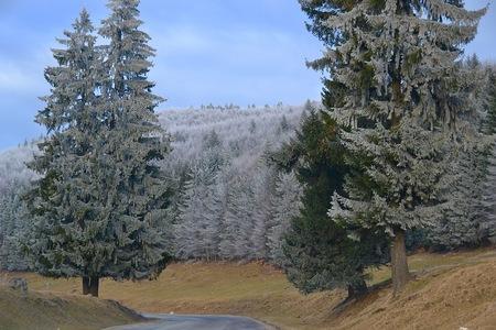 frozen trees: Frozen trees atop the Carpathian Mountains in Romania Stock Photo