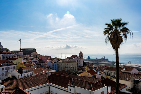 The view from Alfama, on a sunny day, with a palm tree
