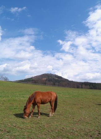 landscape with horse