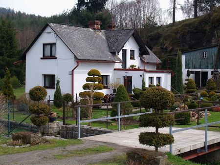 house and garden with amenity tree