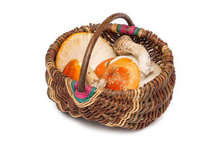 amanita: Basket with Amanita muscaria mushrooms. Orange toadstools. Isolated.