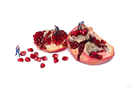 Miniature workers take out the seeds of the pomegranate. Peoples break pomegranates. Teamwork. People cut fruit. Take garnet grains.