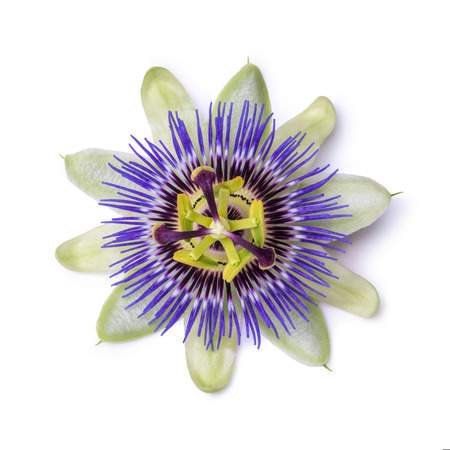 Passiflora passionflower isolated on white background. Big beautiful flower Stock fotó