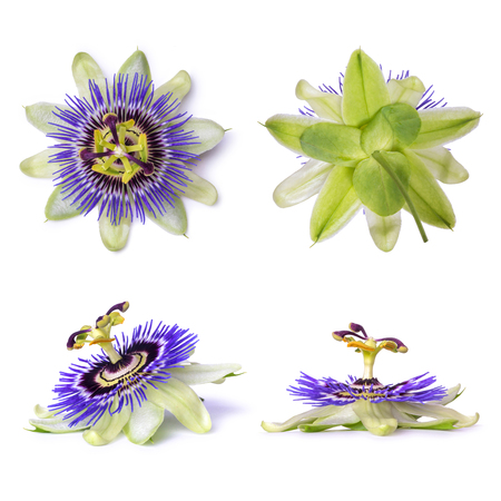 Passiflora passionflower isolated on white background. Big beautiful flower Stok Fotoğraf