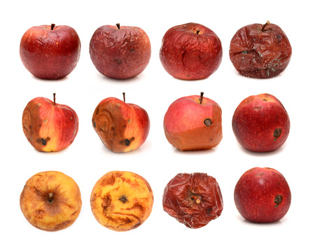 Big set of different rotten apples isolated on white background.