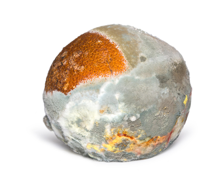 A rotten orange isolated on white background. Natural texture of mold