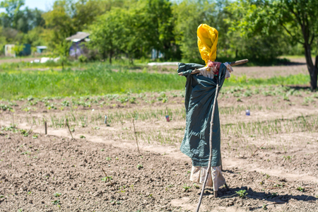 Homemade scarecrow in the garden. Garden attribute