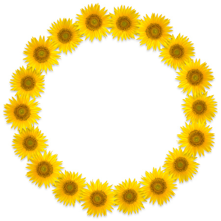 Round frame of sunflower flowers on a white background. Flower wreath. Yellow mandala
