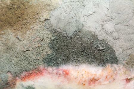 Natural texture of mold on fruit. Rotten background