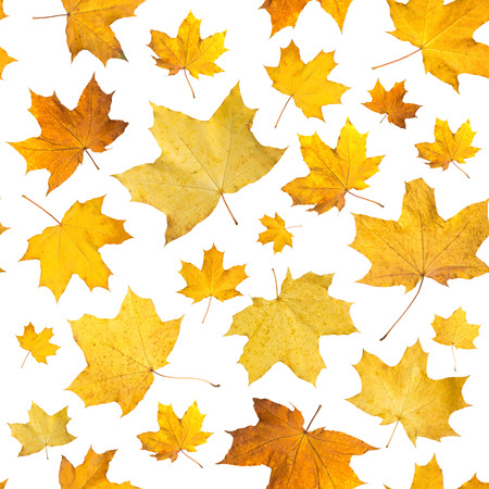 Seamless pattern with dry autumn leaves. Background of maple orange pressed leaves.