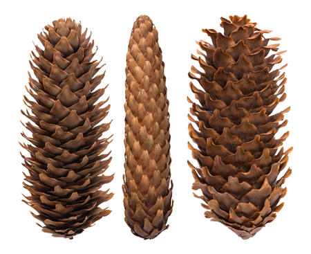 Set of fir cones isolated on white background.