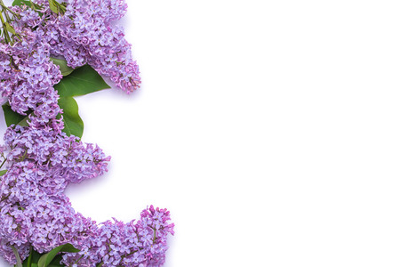 Border of lilac flowers. A bouquet of purple flowers is isolated on white background