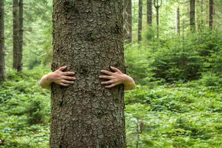 Womens hands hugging a tree. Love of nature