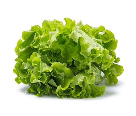 Fresh lettuce leaves isolated on a white background. Salat with water drops.