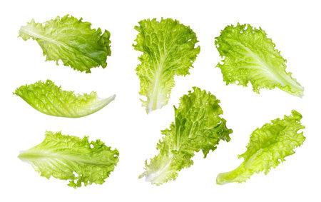 Fresh lettuce leaves isolated on white background