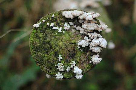 tree mushroom
