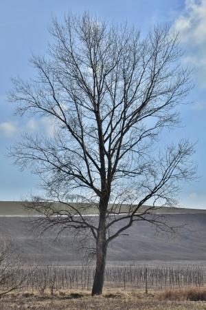 spring tree Stock Photo - 18644510