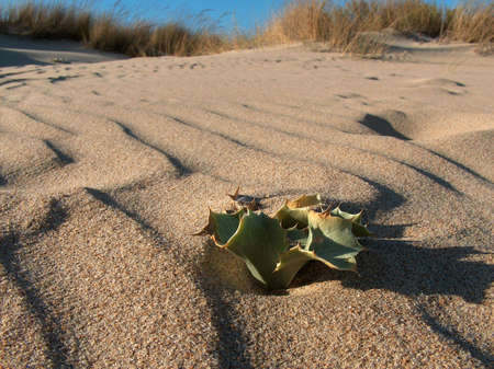 Beach landscape showing dune vegetation, shot in south Spain. Stock Photo