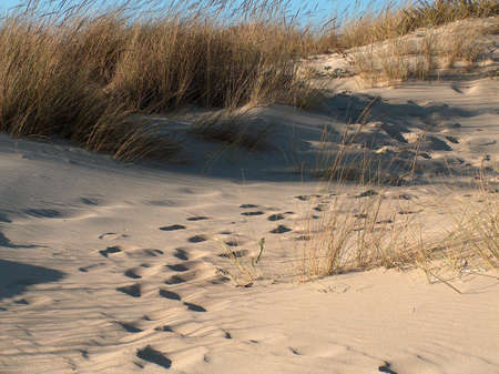 Footprints on a beach dune, shot in south Spain.