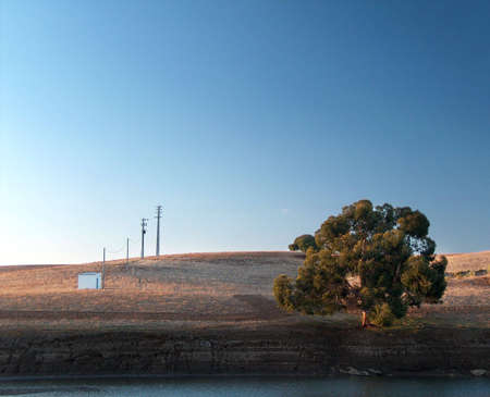 Tree living on the edge of a river. Photo taken on the south of Portugal, Alentejo, the region of the great plains.