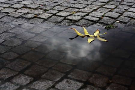 puddle: Yellow leaf floating in a water puddle after some heavy rain. The reflection of a cloud can still be seen on the water.