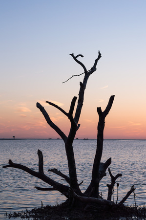 myers: Silhouette of a tree. View from Dog Beach Fort Myers Florida