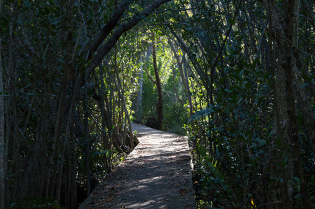 archway: Archway through trees with a path