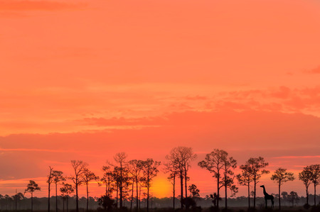 Orange Sunrise in Punta Gorda Florida Imagens