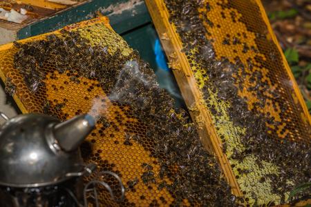 Raucher bereit für die Arbeit im Bienenstock vor Waben Standard-Bild - 81282933