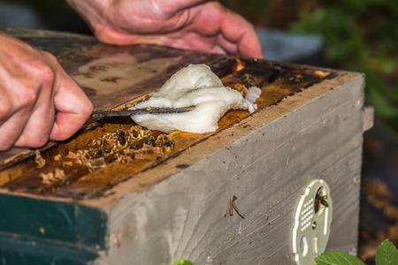 Imker liefert Bienen von Saccharose zwischen Bienenrahmen in Bienenstock Standard-Bild - 81287957